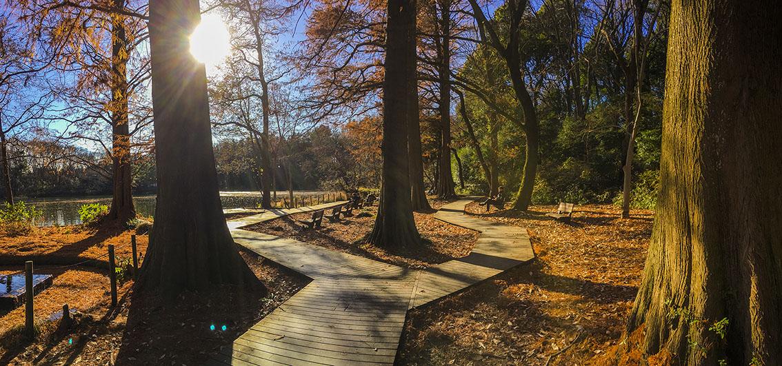 三宝寺池周辺の湿地帯は市民の憩いの場です。